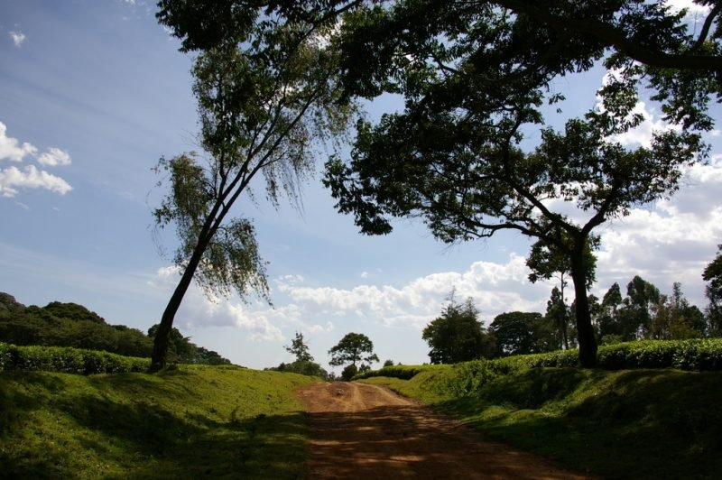 Réserve nationale de la forêt de Kakamega, Kenya