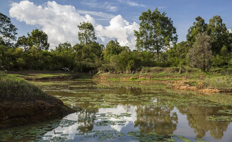 Forêt de Karura, Kenya