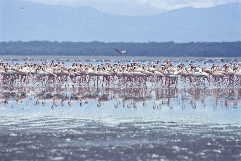 Lac Bogoria, Baringo, Kenya