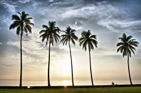 Dans quel quartier loger à Suva ?