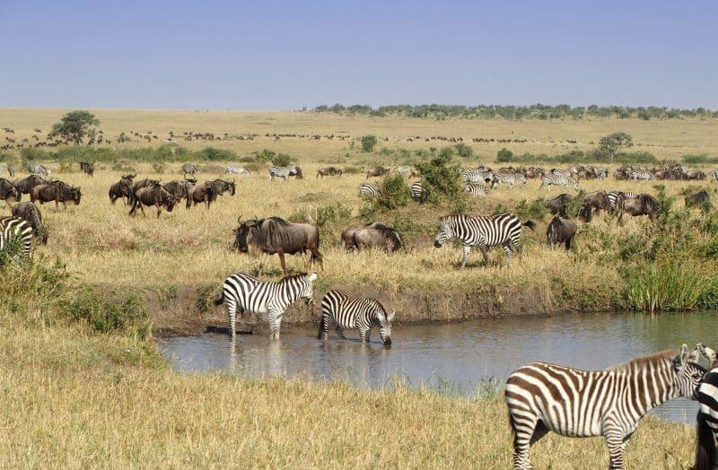 Réserve nationale du Masai Mara, Narok, Kenya
