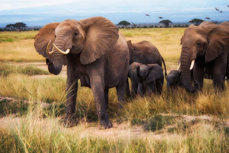 Parc national de Nairobi, Kenya