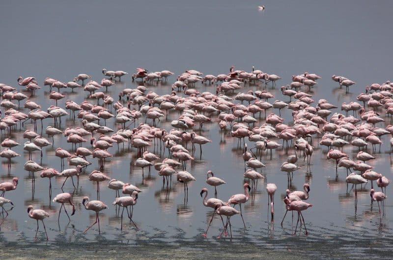 Lac Nakuru, Kenya