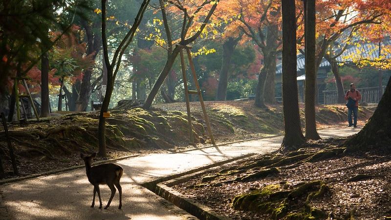 Nara Park ou Nara Kôen