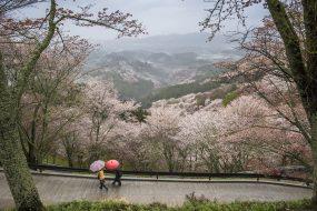 Dans quel quartier loger à Nara ?