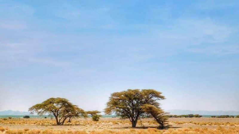 Parc national Sibiloi, Kenya