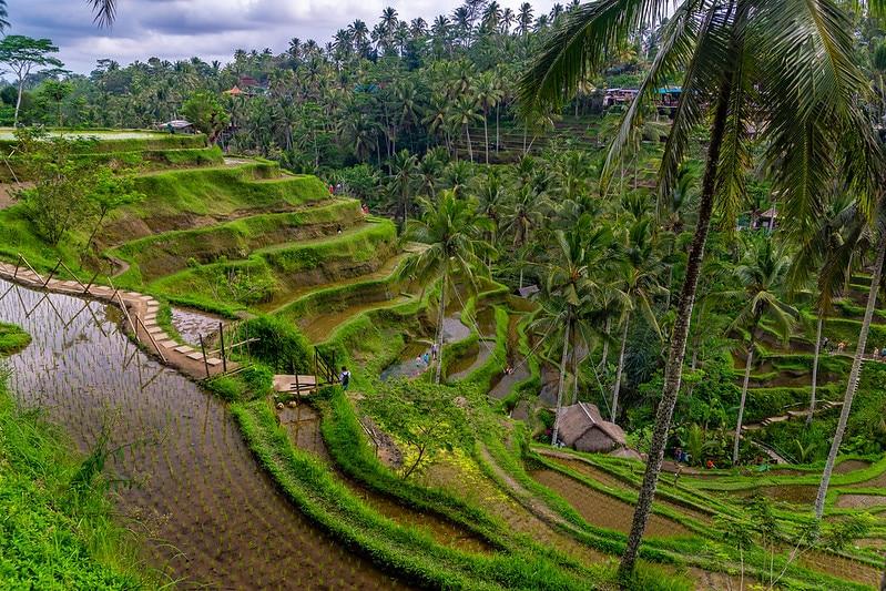 Rizière Tegallalang, Ubud, Bali