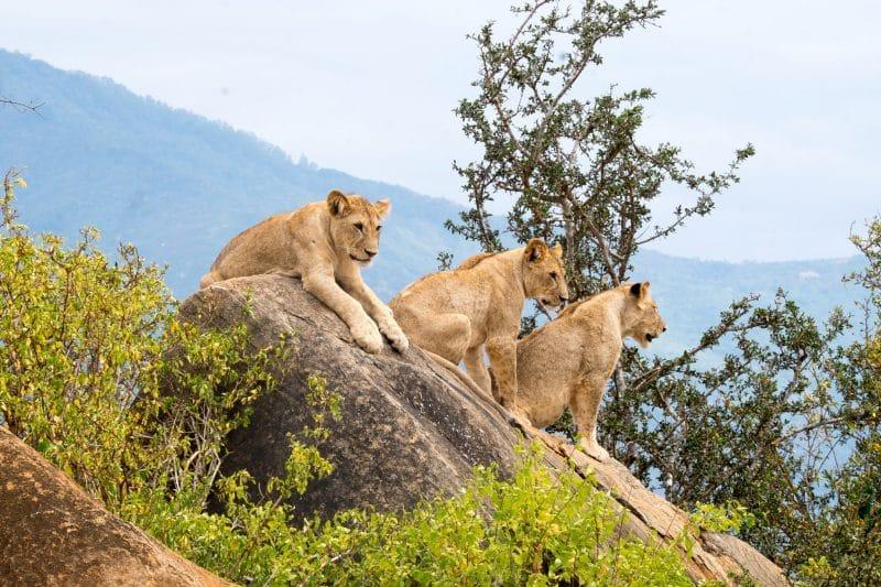 Parc national Tsavo East, Kenya
