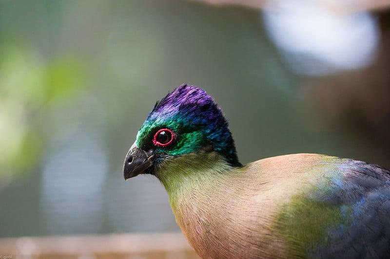 Umgeni River Bird Park, Durban