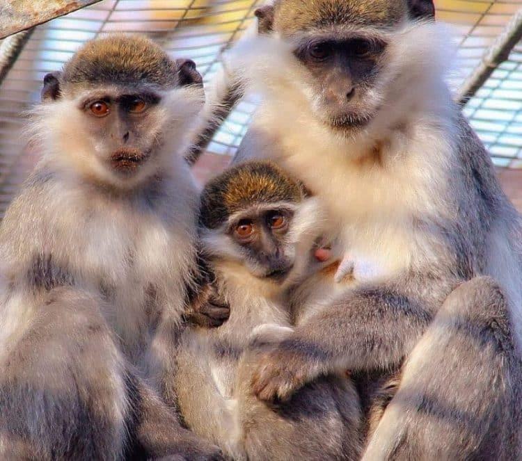 Zoo Odessa