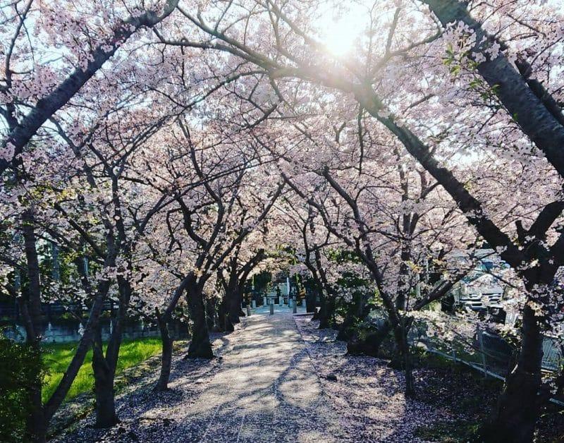 Nishinokyo, Yakushi ji, Nara