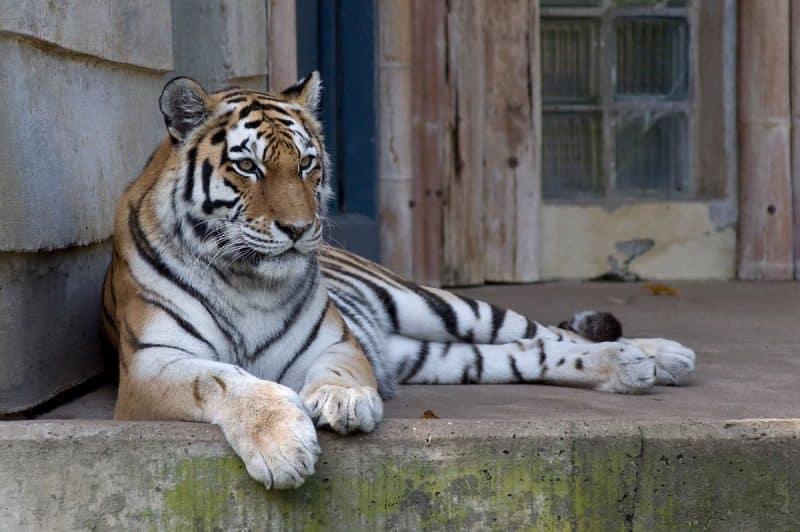 Zoo d'Anvers