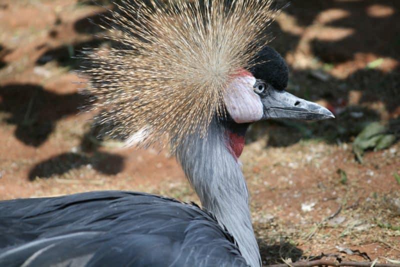 Zoo de Pretoria