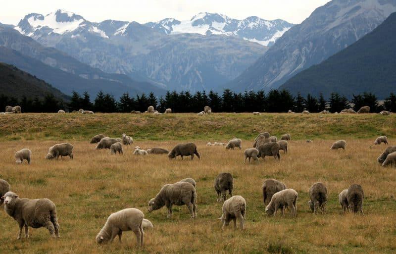 Arthur's Pass, Nouvelle-Zélande