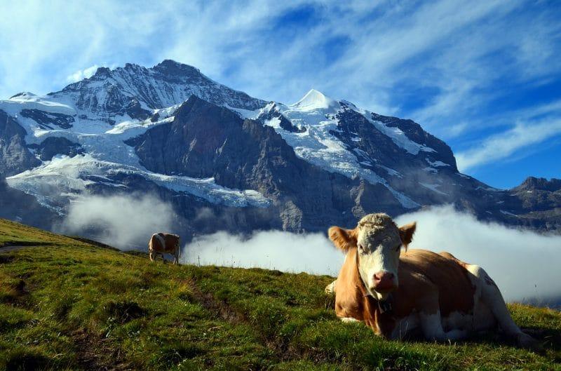 Balade paysage Kleine Scheidegg, Suisse