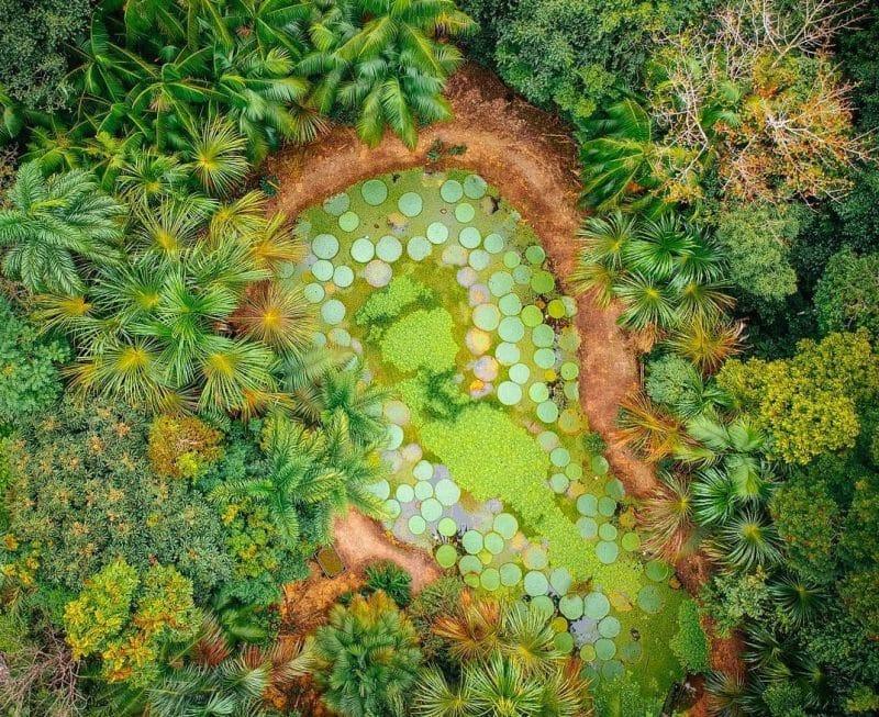 Manaus Botanical Gardens MUSA