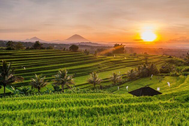 Visiter les rizières de Bali : billets, tarifs, horaires