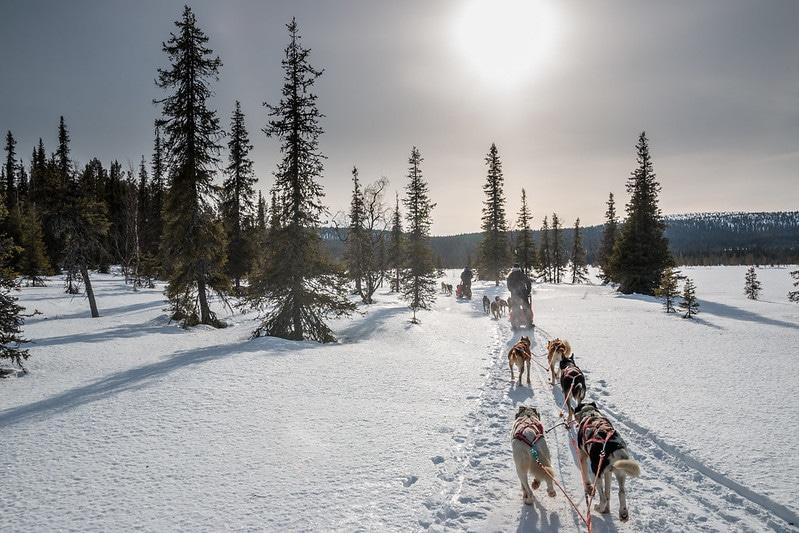 Par national Yllästunturi, Finlande