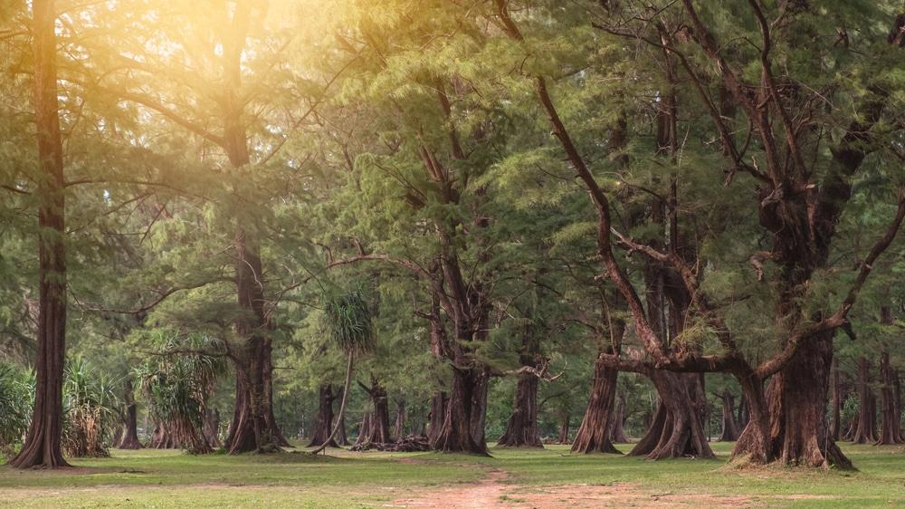 Forêt du parc national de Sirinat, Phuket