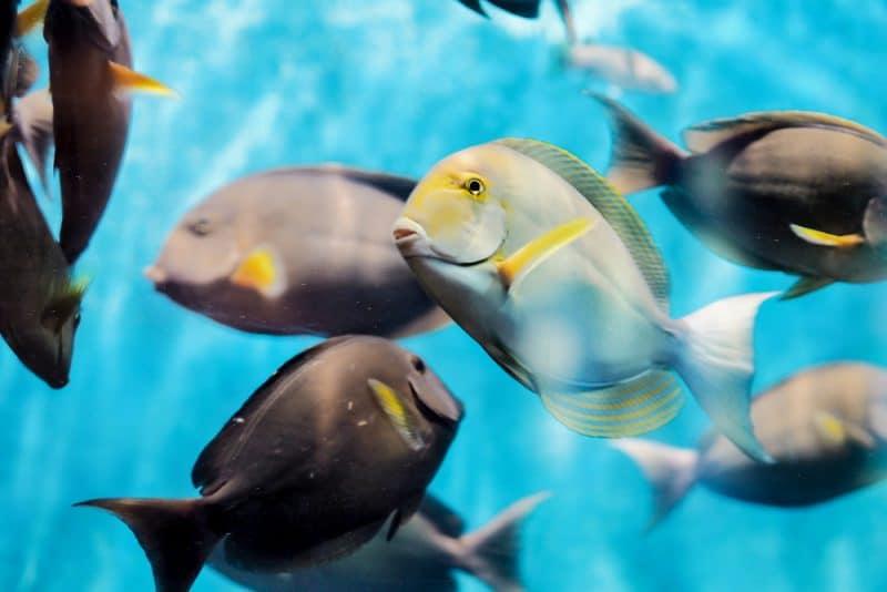 Histoire de l'aquarium de Phuket