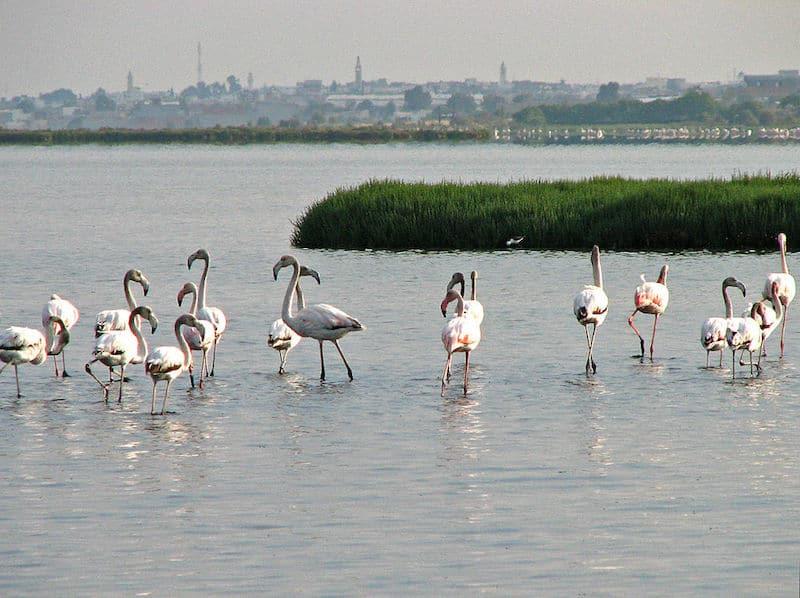 Lagune de Korba