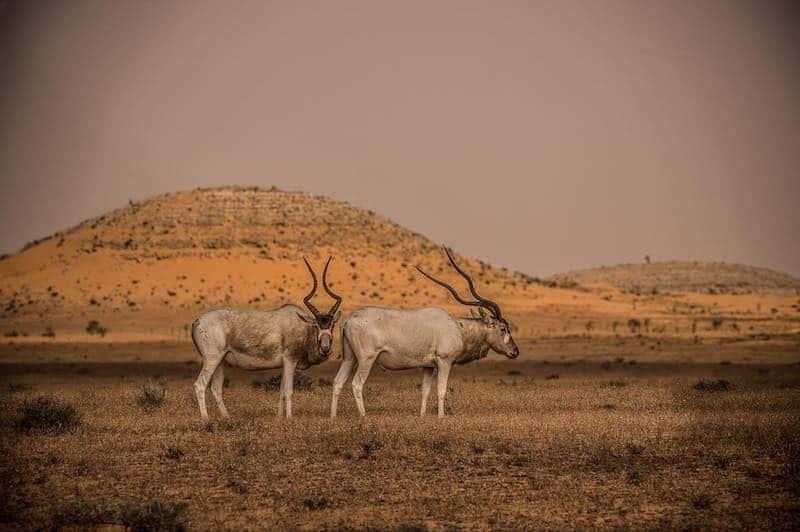 Parc National de Jbil