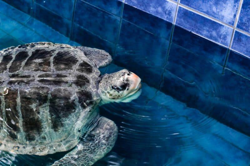 Que voir et que faire à l'aquarium de Phuket ?