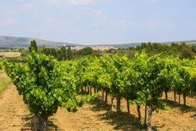 Vignoble Montpellier