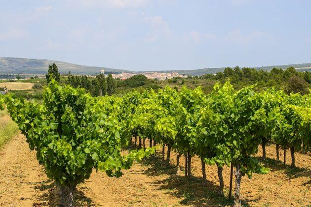 Où faire une dégustation vin autour de Montpellier ?