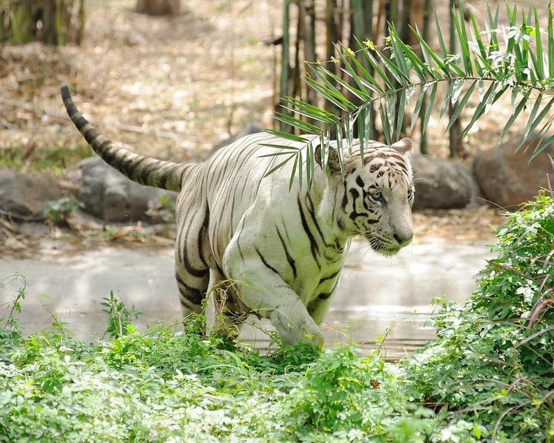 Rajiv Gandhi zoo