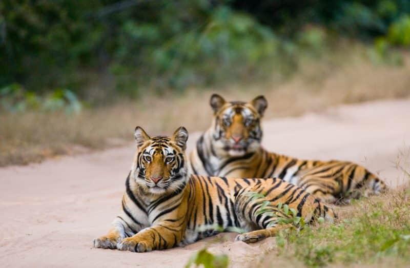 Parc national de Bandhavgarh, Inde