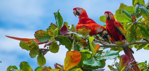 Les 20 plus beaux endroits à visiter au Costa Rica