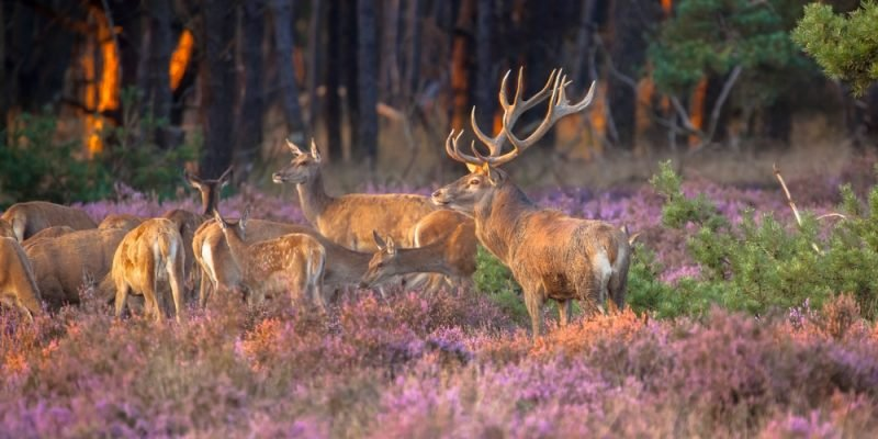 Parc national de Hoge Veluwe, Pays-Bas