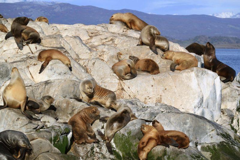 Isla de Lobos, Uruguay, lions de mer