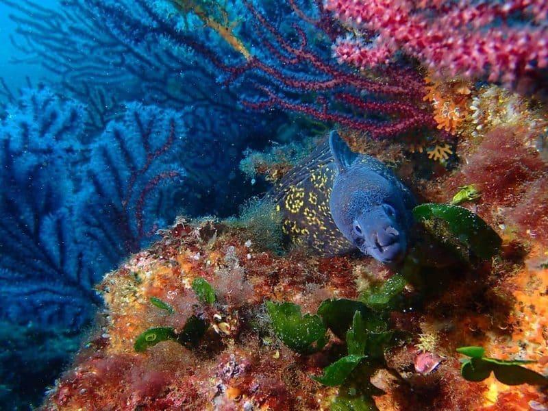 Plongée et snorkeling à Cassis
