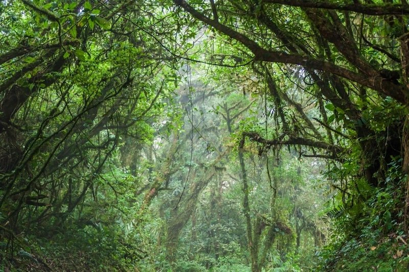 Réserve biologique Monteverde, Costa Rica