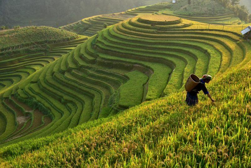 Rizière de Sa Pa, Vietnam