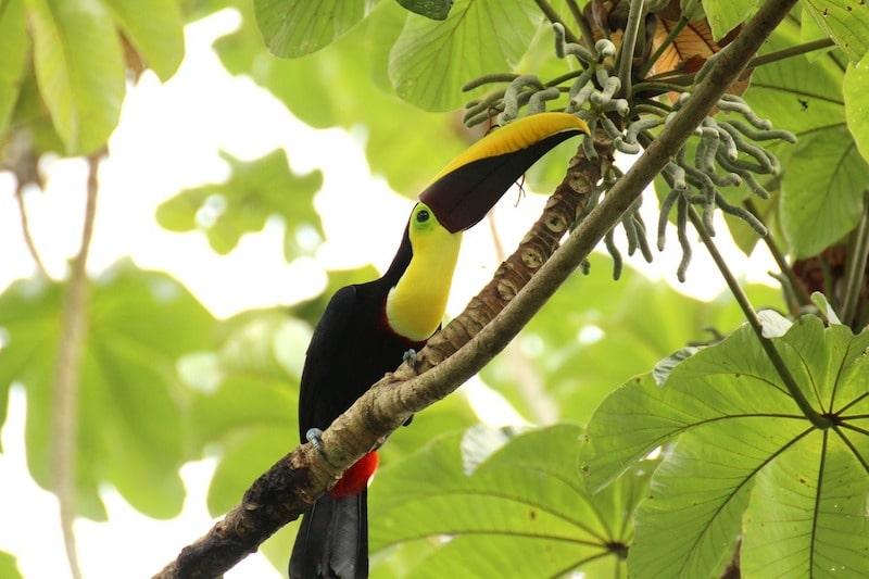 Parc National Manuel Antonio, Costa Rica