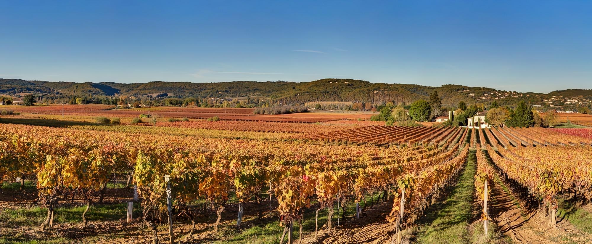 Vignoble, Cahors