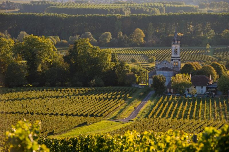 Vignobles, Sauternes