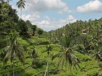 Assurance voyage pour l'Indonésie : notre guide complet