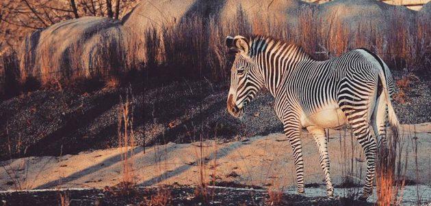 Visiter le Parc zoologique de Paris (Vincennes) : billets, tarifs, horaires