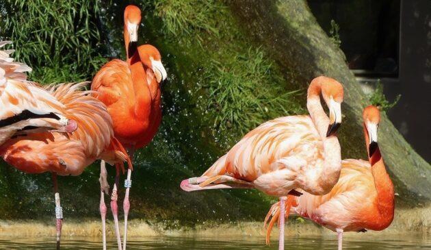Visiter le Zoo de la Palmyre : billets, tarifs, horaires