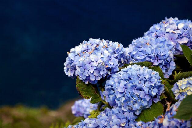 Le paradis perdu de l'île aux Fleurs des Açores, au Portugal