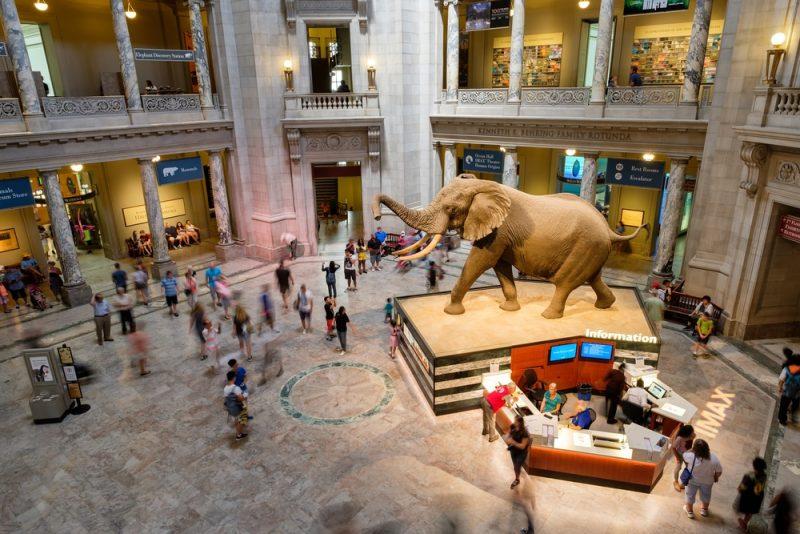 Histoire du Musée de l'Histoire Naturelle à Washington