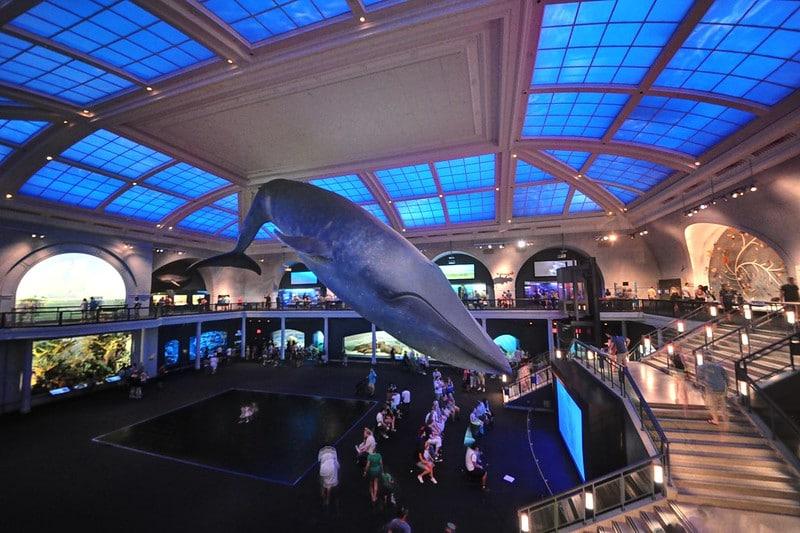 Musée d'histoire naturelle, New-York