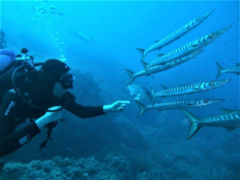 Plongée à Bonifacio, Corse