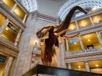 Visiter le Musée d'Histoire Naturelle à Washington