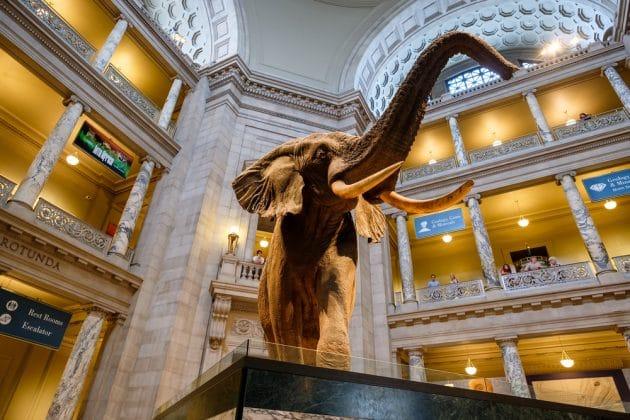 Visiter le Musée National d'Histoire Naturelle à Washington : billets, tarifs, horaires