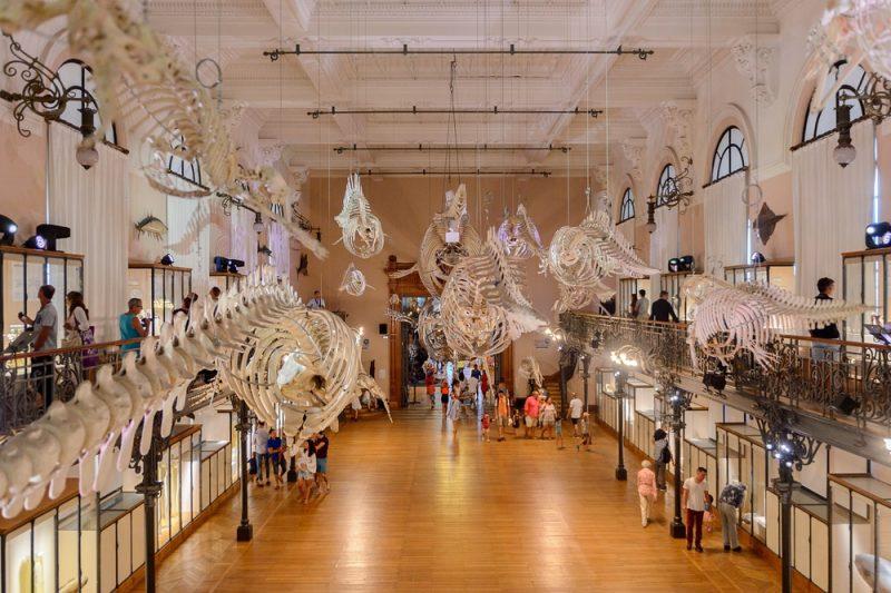 Que voir et faire au musée océanographique de Monaco ?